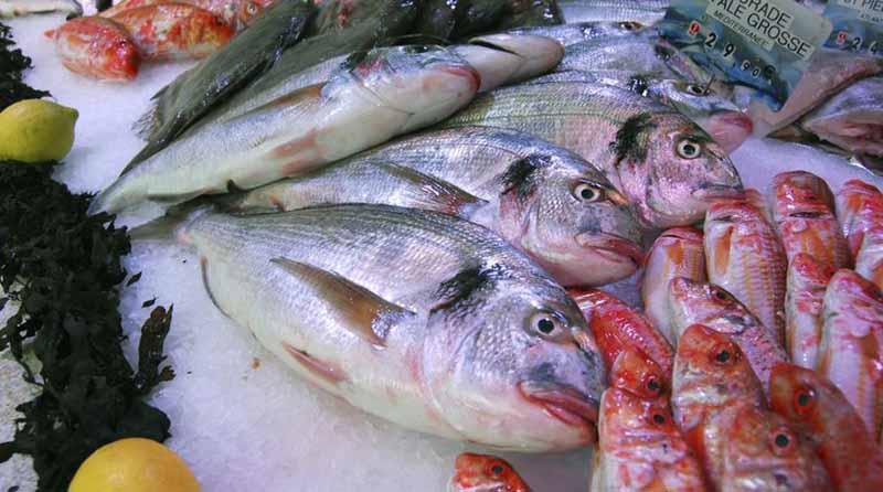 México distribuirá 325 mil toneladas de pescados y mariscos en Cuaresma
