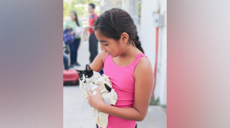 Realizarán esterilizaciones caninas y felinas en Comondú y Loreto
