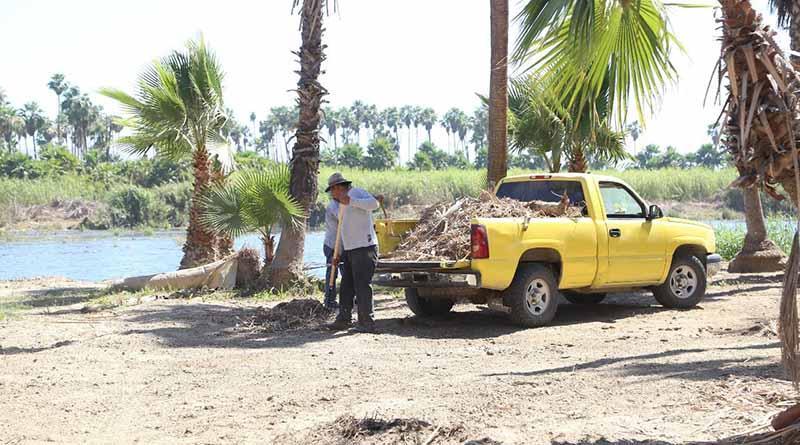 El material vegetativo que se retira del Estero Josefino, es donado a 2 viveros de SJC
