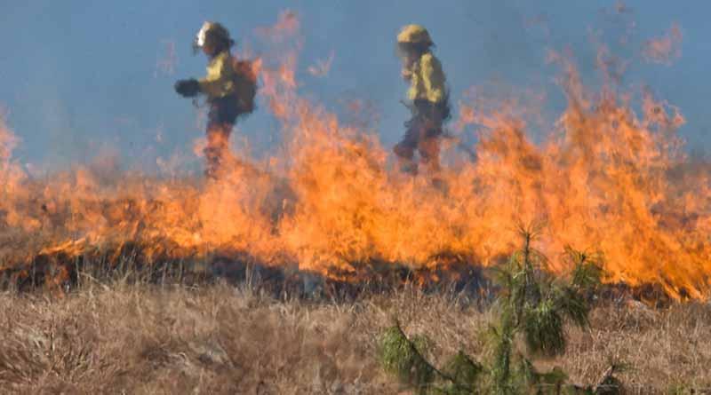 Incendios forestales afectan 15 estados del país