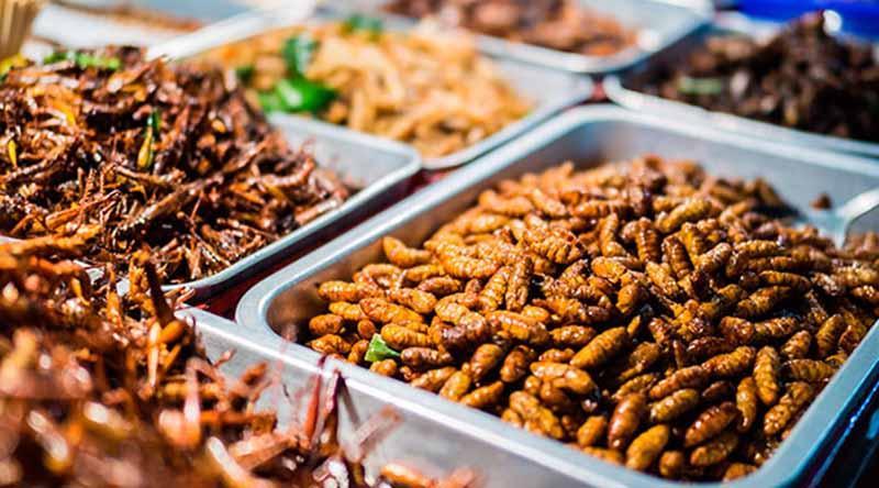 México, uno de los países más ricos en insectos comestibles