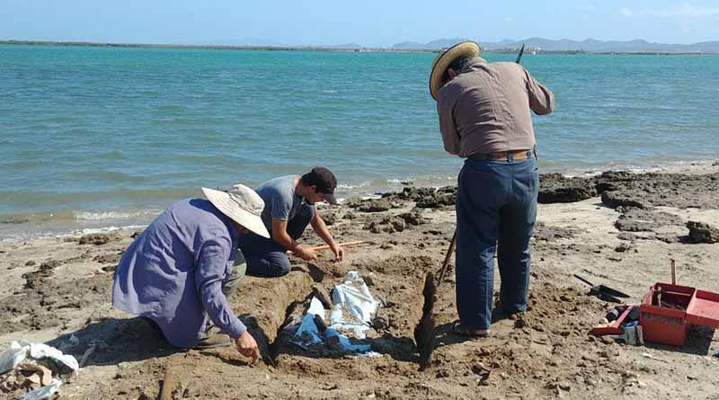 Siguen localizando osamentas prehispánicas en playas de La Paz