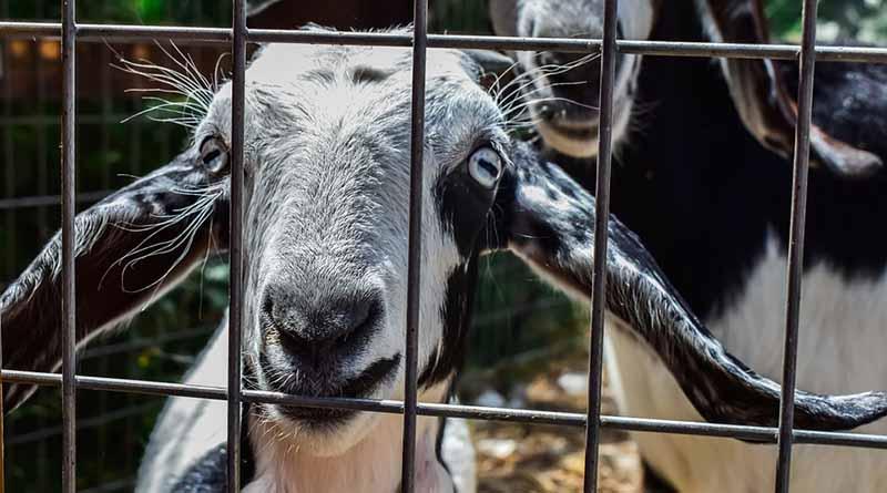Ganancias por tráfico de animales puede superar al de drogas o armas