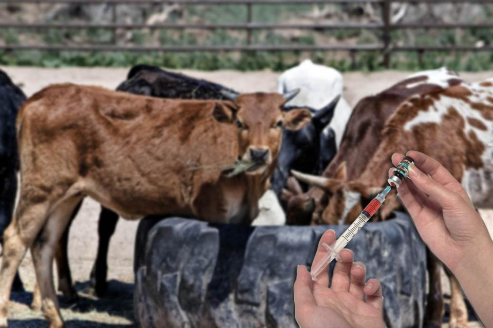 Europa limitará uso veterinario de antibióticos