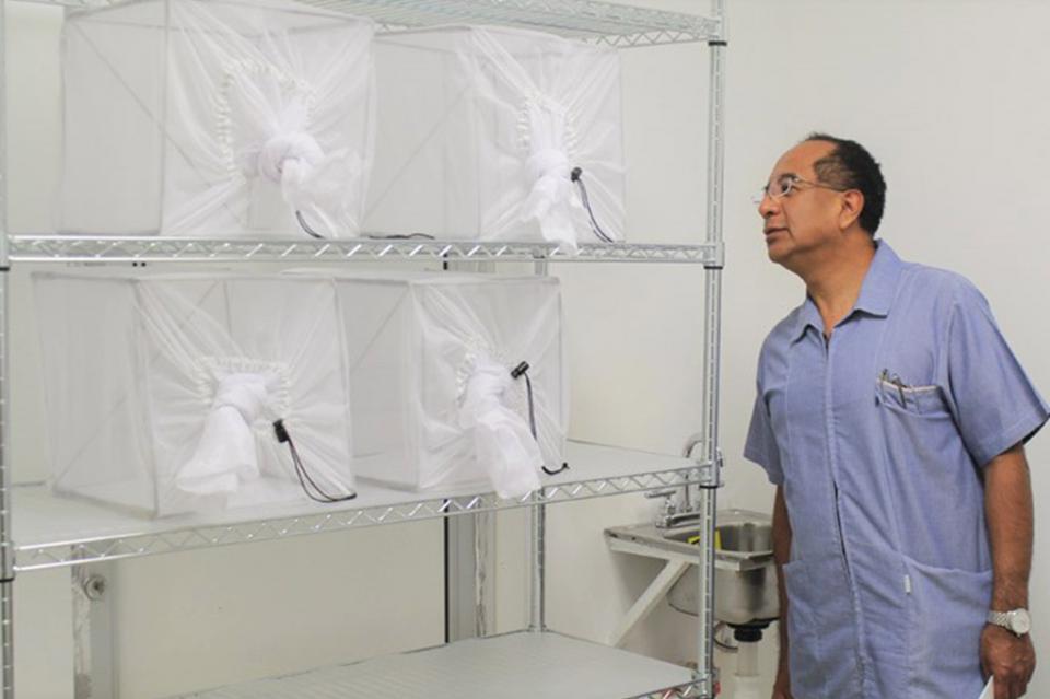 Secretaria de Salud socializa el Método Wolbachia que impulsa para combate al Dengue