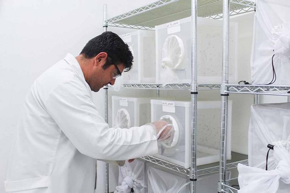 El combate al dengue se fortalece en BCS con una tecnología segura y probada: Mendoza Davis