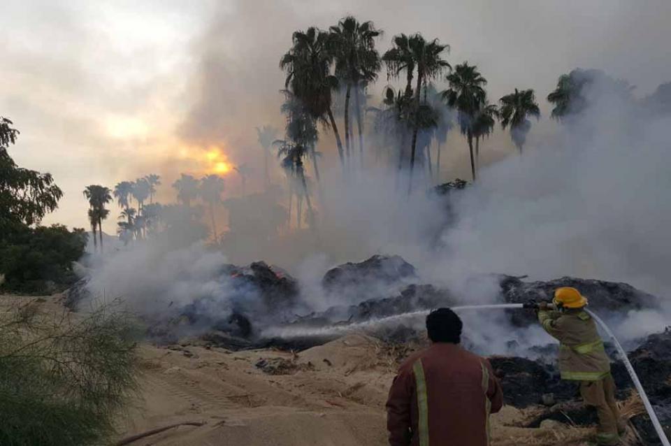 Se queman alrededor de 200 metros de palmas y ramas en Guaymitas