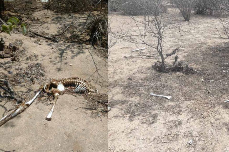 Localizan restos humanos en el municipio de Comondú y La Paz