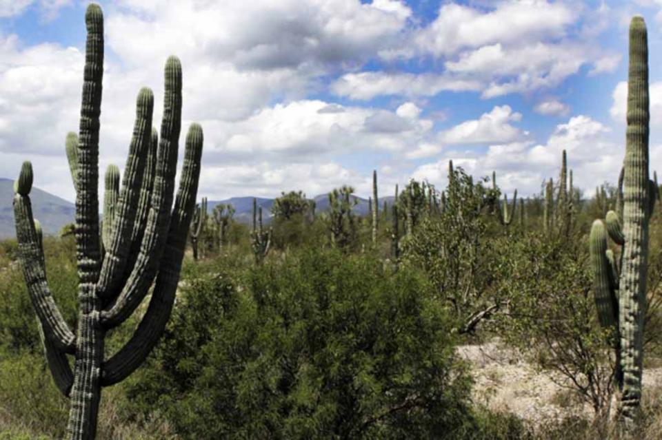 México, el país de América con más sitios Patrimonio de la Humanidad