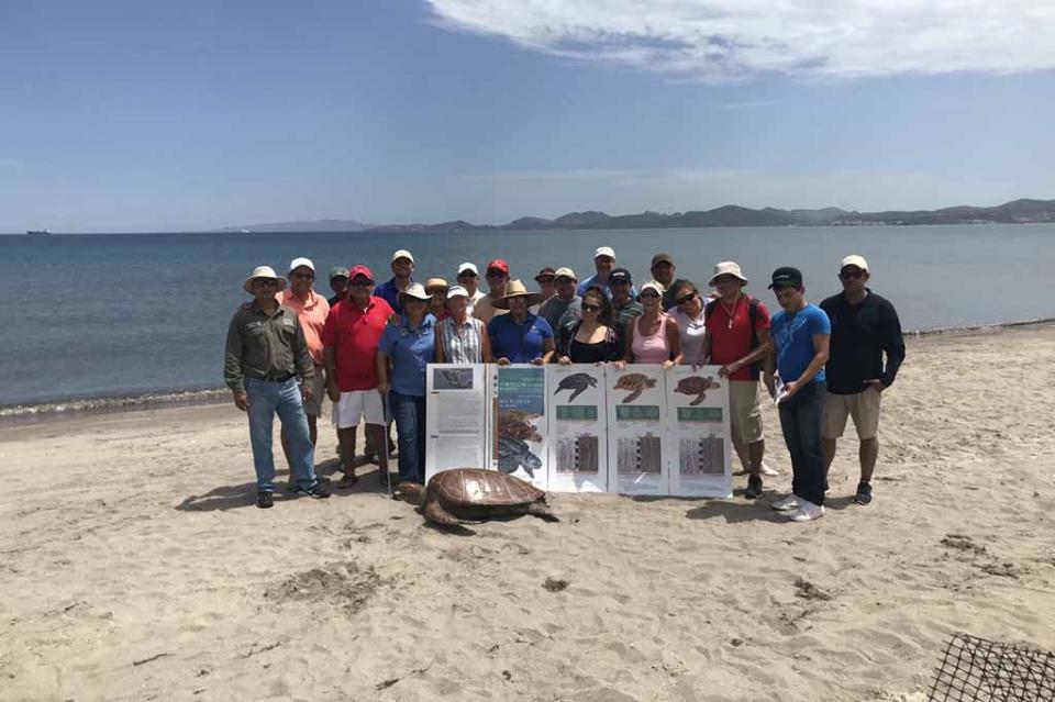 Inicia gobierno de Los Cabos talleres de capacitación para la protección de la tortuga marina