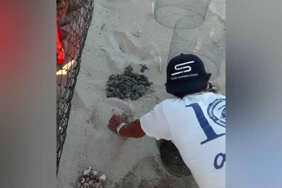 Ecología Municipal realizó programas para conservación de gallito marino y tortuga marina