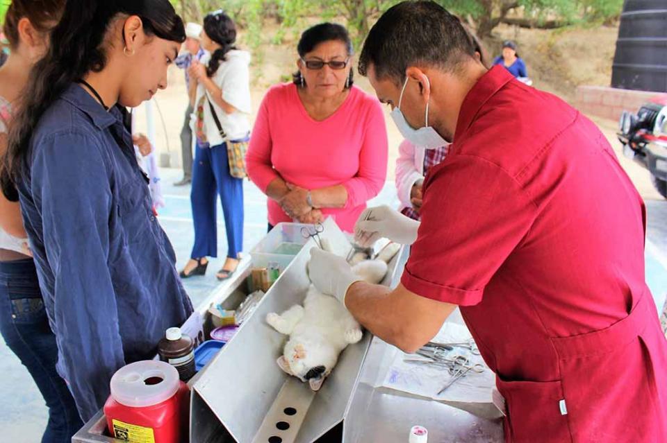 Salud continúa con acciones de esterilización canina y felina