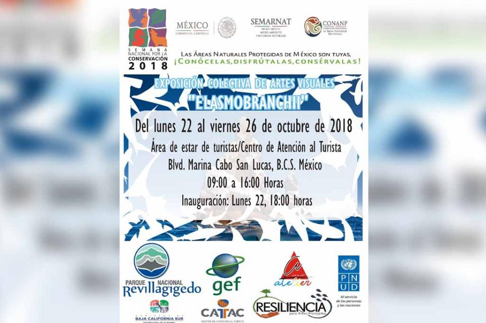 """Con exposición colectiva de artes visuales """"ELASMOBRANCHII"""", celebran Semana Nacional por la Conservación"""