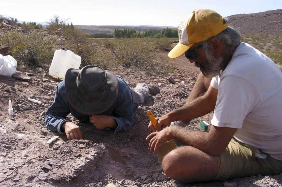 Hallan en Argentina restos de una nueva especie de dinosaurio saurópodo