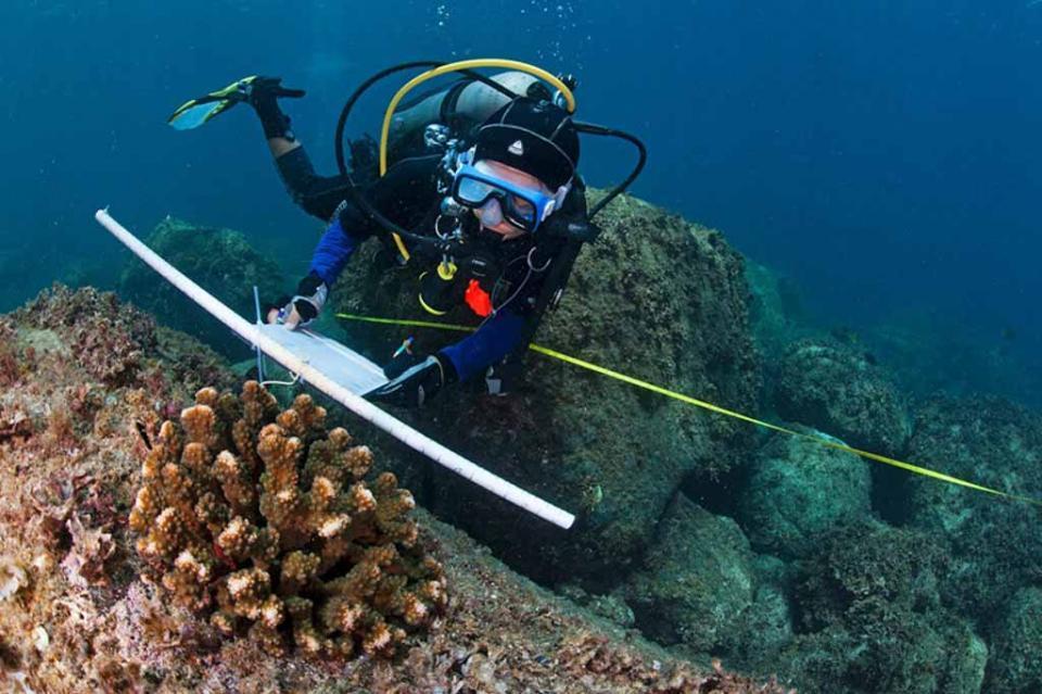 Científicos de la UABCS descubren nueva especie de anémona de mar