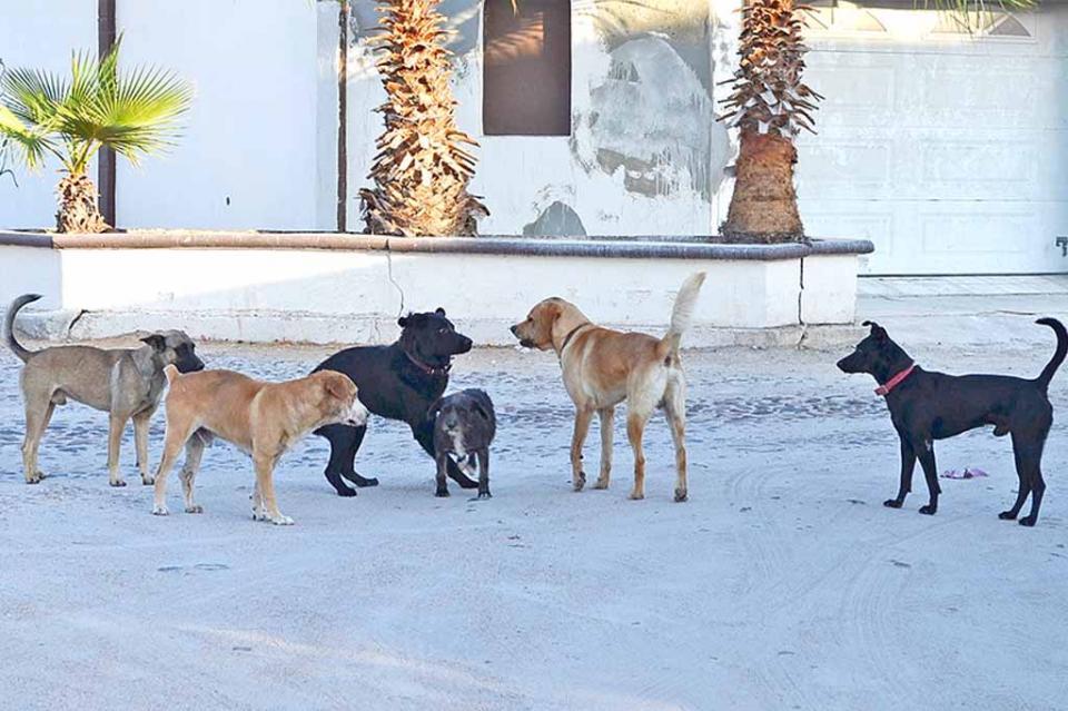 Delicada la desatención de mascotas en Los Cabos, podría desencadenar serio problema de salud pública: Irais Hernández