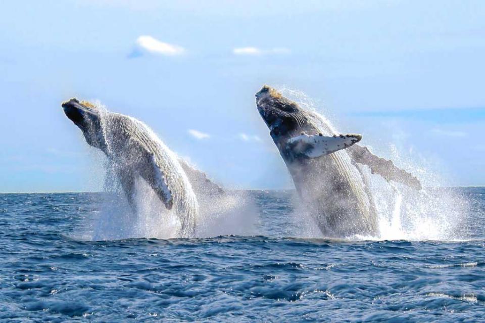 Cabo San Lucas es el destino de avistamiento de ballenas por excelencia en todo el mundo