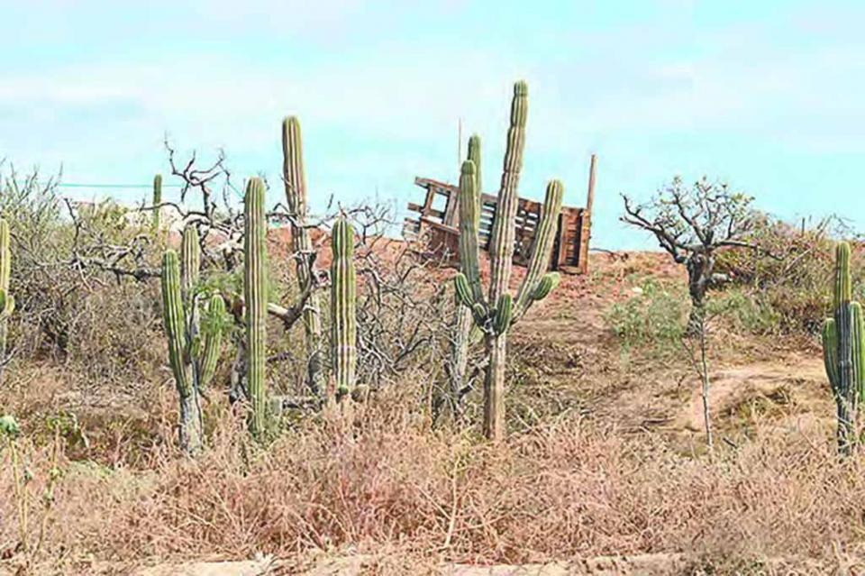 Persisten invasiones en Chula Vista y nadie hace algo por frenarlas: vecinos