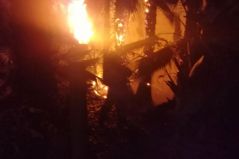 3 incendios afectan palmares en Todos Santos