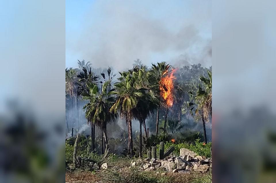 Se incendia palmar en Todos Santos