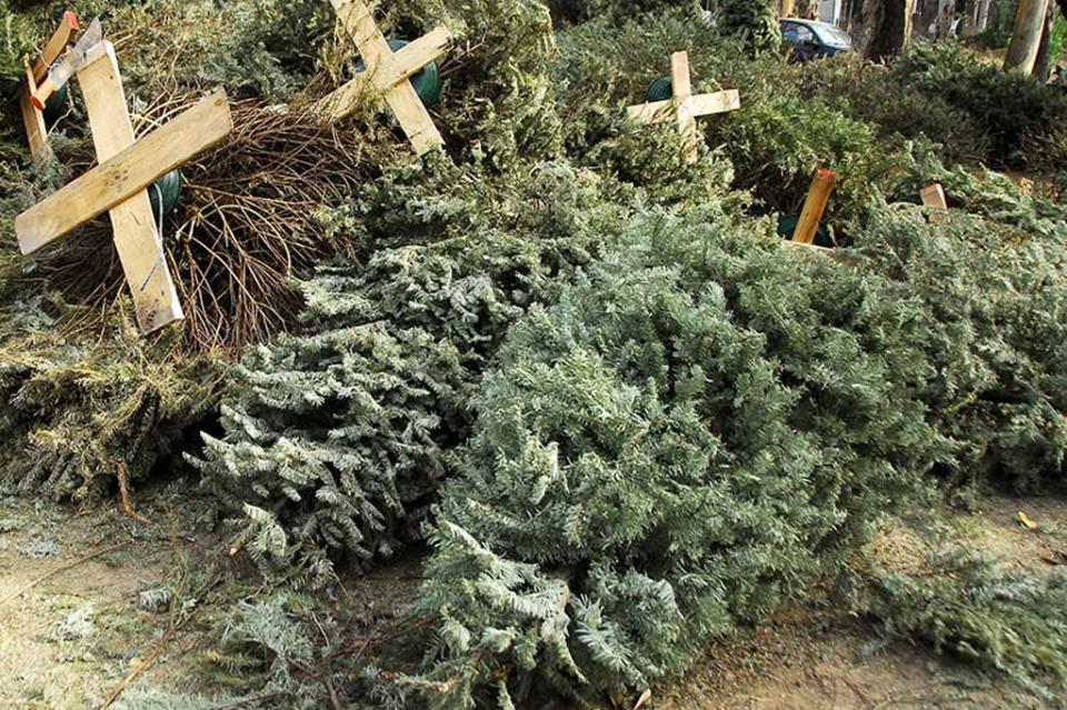 Servicios Públicos habilitará centros de acopio para árboles navideños