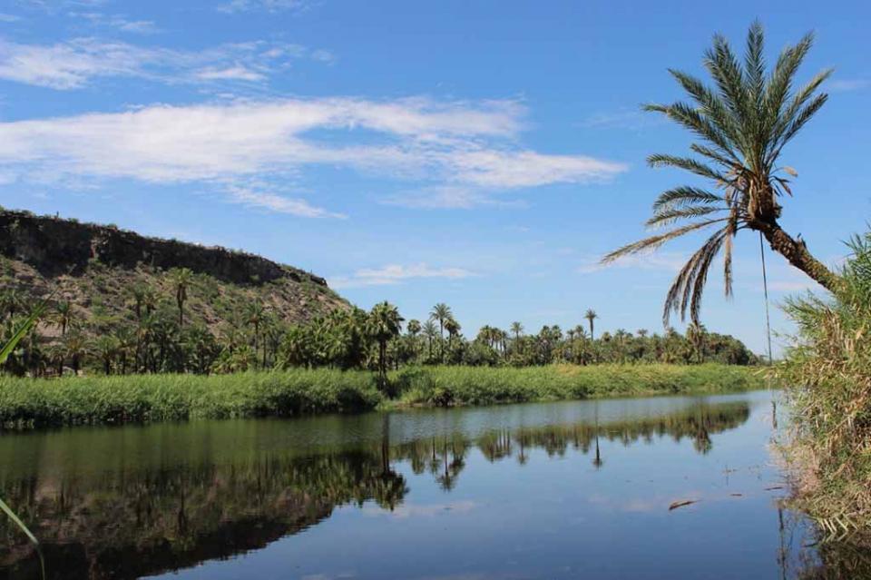 Impulsará gobierno la economía rural a través de los oasis
