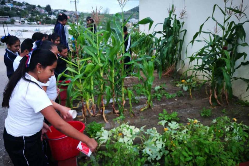 Fomenta SETUES cuidado ambiental en escuelas primarias
