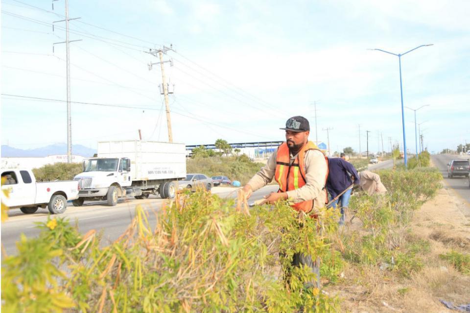 Continúa Servicios Públicos limpieza de camellones sobre la carretera Transpeninsular