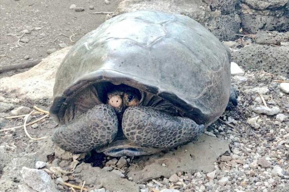 Hallan en Galápagos tortuga gigante que se creía extinta hace 100 años