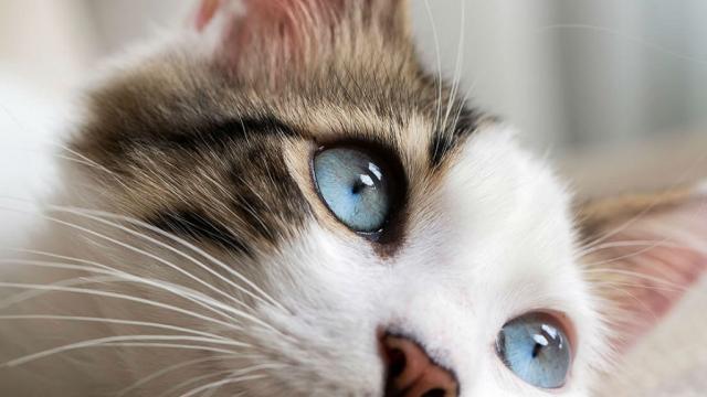 Destacan en foro existencia de antibiótico innovador para gatos