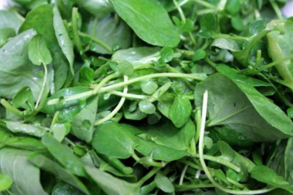 Los quelites, planta mexicana que inhibe bacteria que genera gastritis