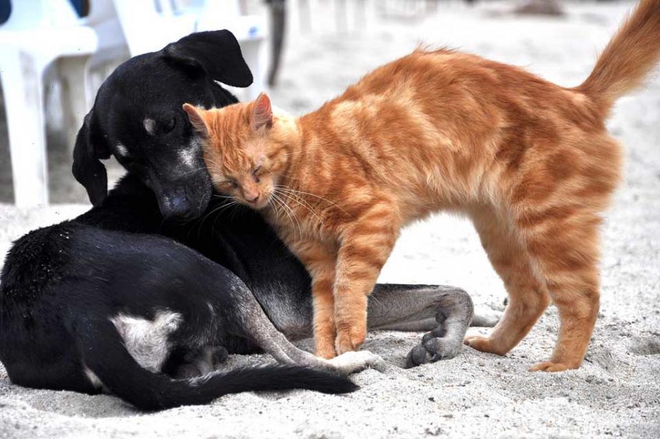 Hay cuatro animales infectados con COVID-19 OMS