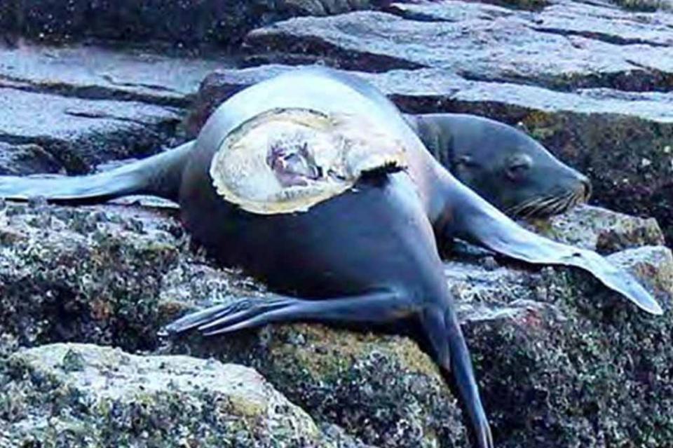 Aún se está a tiempo de frenar depredación marina, llamado de Asudestico a autoridades de Gobierno