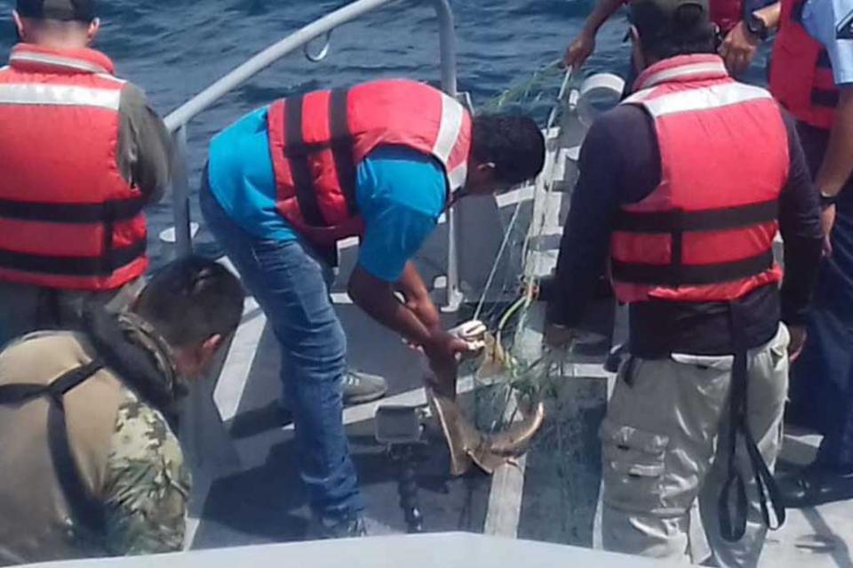 Marina recupera redes que dañan especies marinas en Baja California Sur