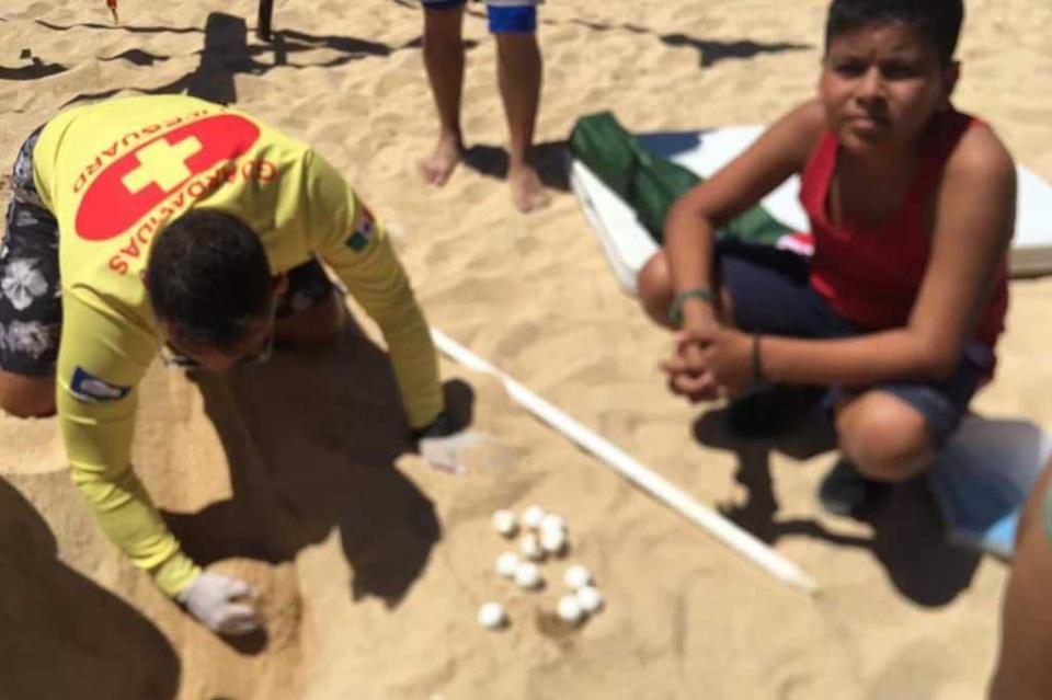 Niño encuentra nido de tortuga en playa El Chileno
