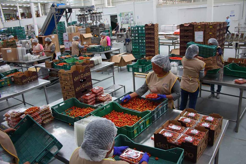 Cierre parcial de fronteras con EU está afectando exportación de productos orgánicos de Los Cabos; panorama incierto, asevera Jesús Herrera Garnica