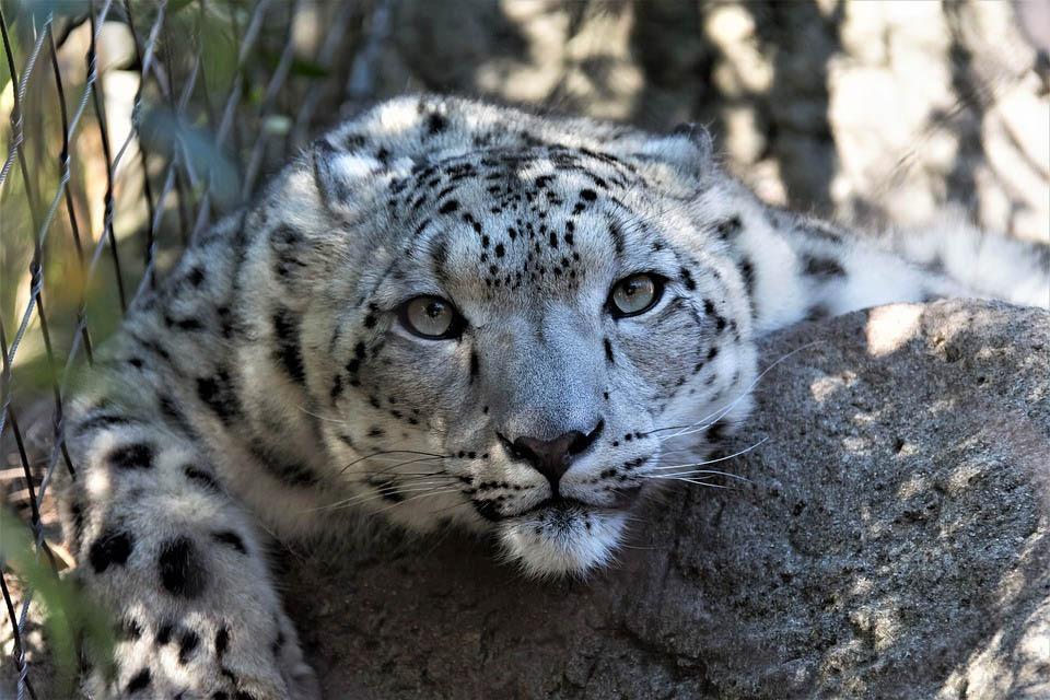 Aún es tiempo de salvar especies en riesgo de extinción alerta reporte