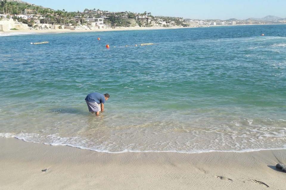 Los Cabos el destino con playas más limpias informa Zofemat