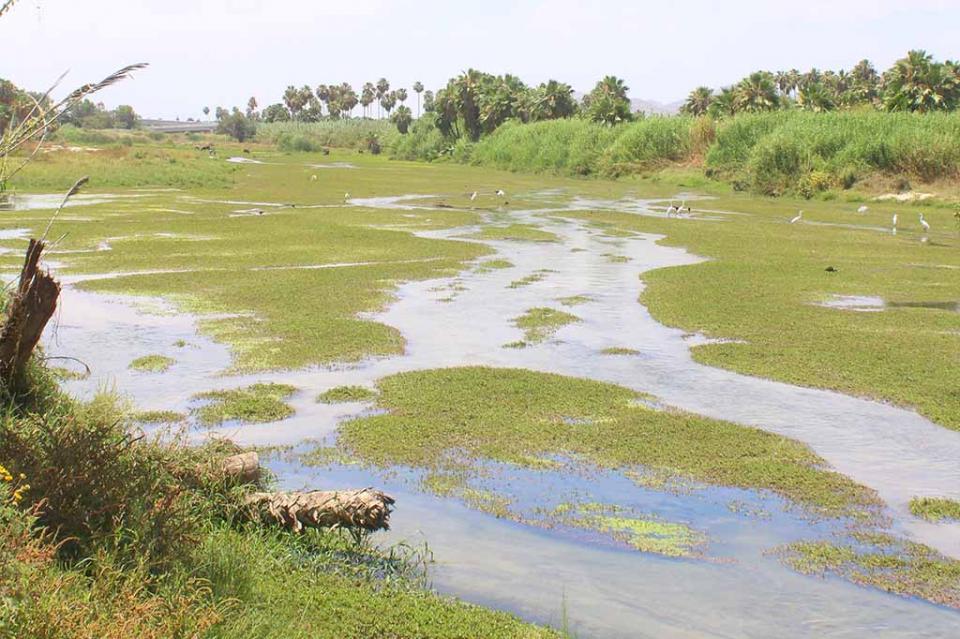 Confirman que Conagua realiza estudio sobre la cuenca del Estero San José