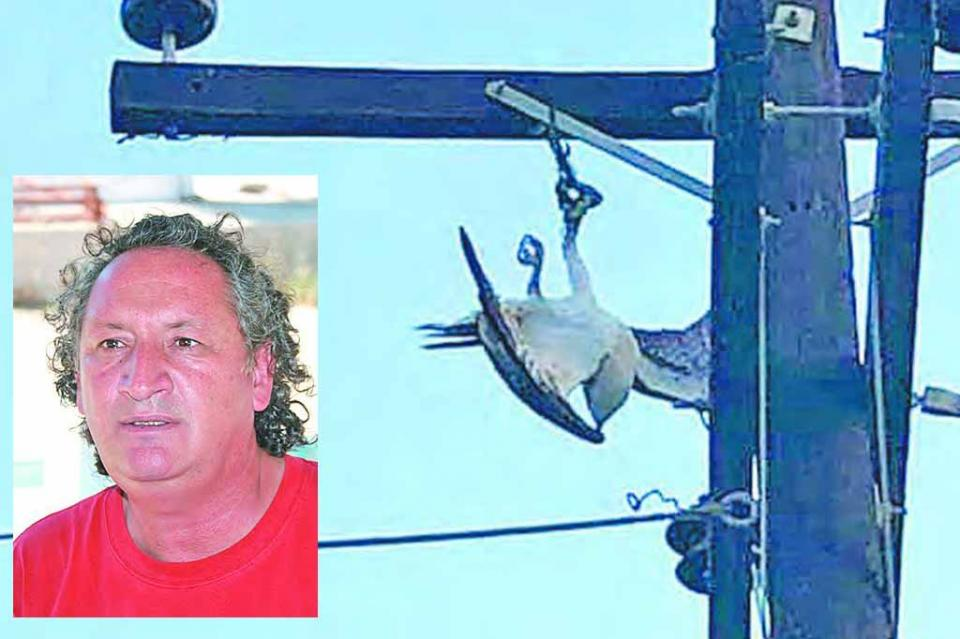 Las aves rapaces no son mascotas; son especies protegidas en México, hay que cuidarlas y preservarlas: Carlos Narro