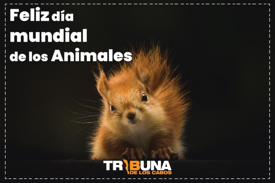 Hoy se celebra el Día de los Animales