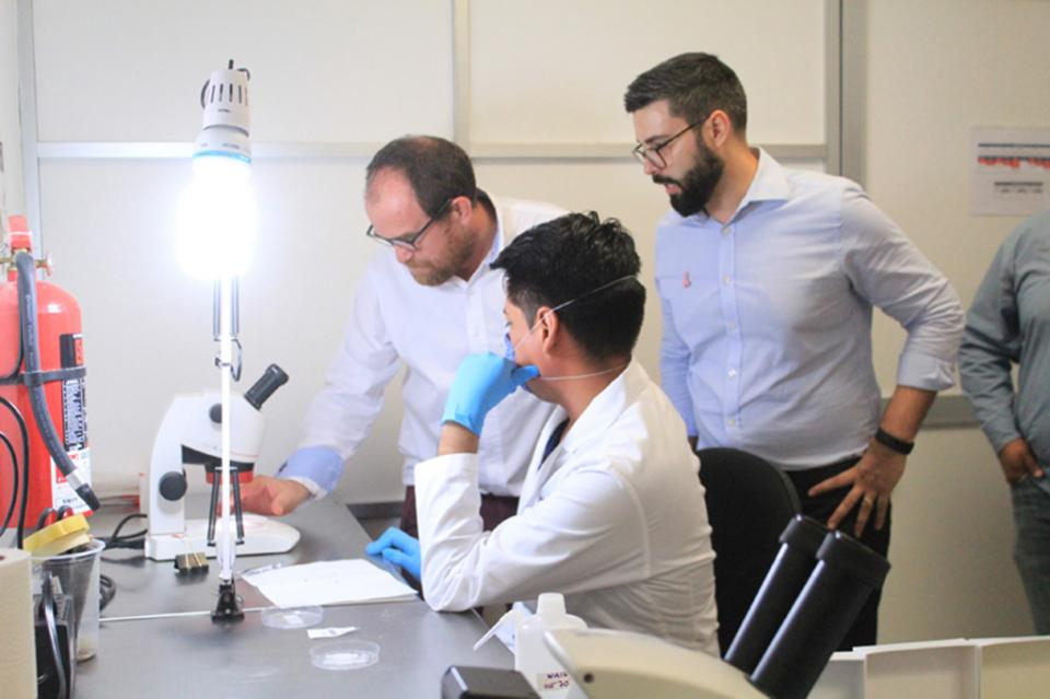 Con el proyecto Wolbachia está BCS a la vanguardia en el combate al Dengue