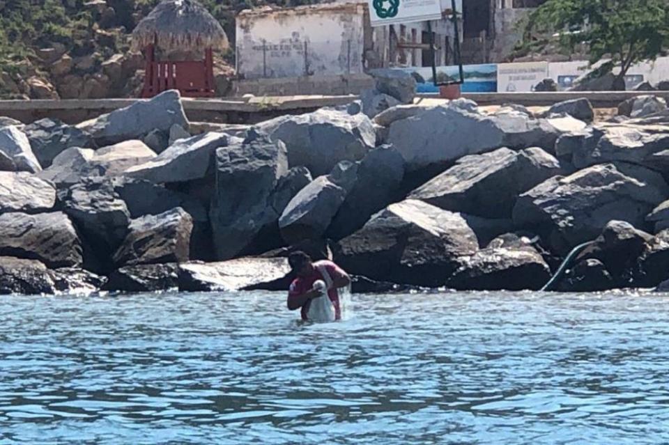 Continúan pescando con red en Área Natural protegida de Cabo San Lucas