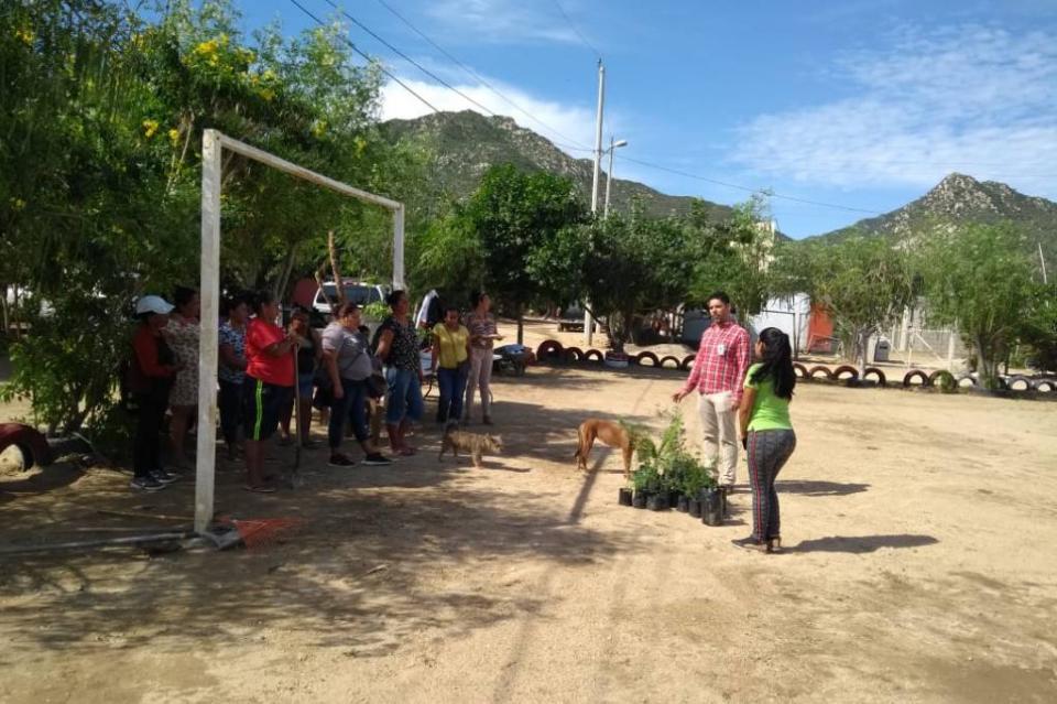 Continúa la XIII Administración reforestando Los Cabos