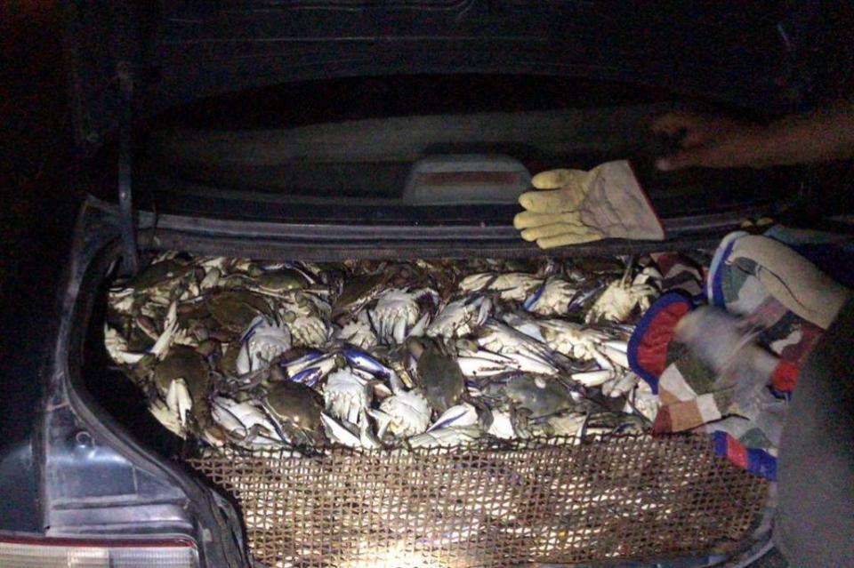 Lo detienen por llevar 200 kilos de jaiba sin permiso en carretera La Paz-Insurgentes