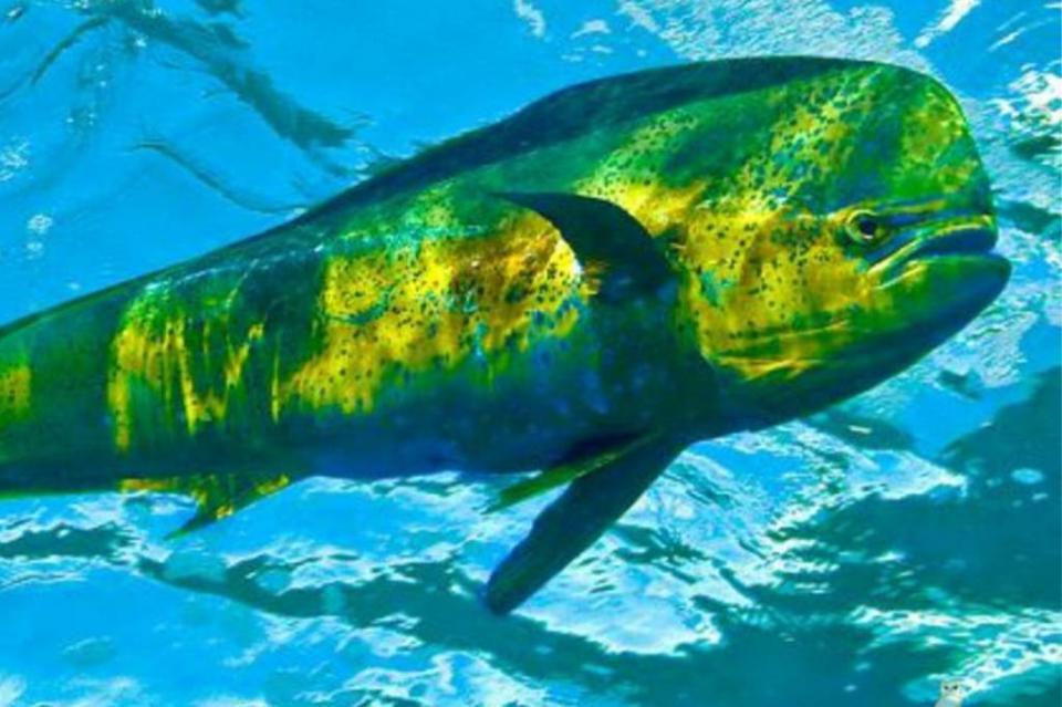 Fracción Parlamentaria del PT fija postura contra liberación de especies protegidas para la pesca deportiva