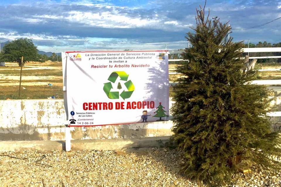 Servicios Públicos extiende hasta el mes de febrero el programa de acopio de arbolitos navideños: Roberto Sandoval