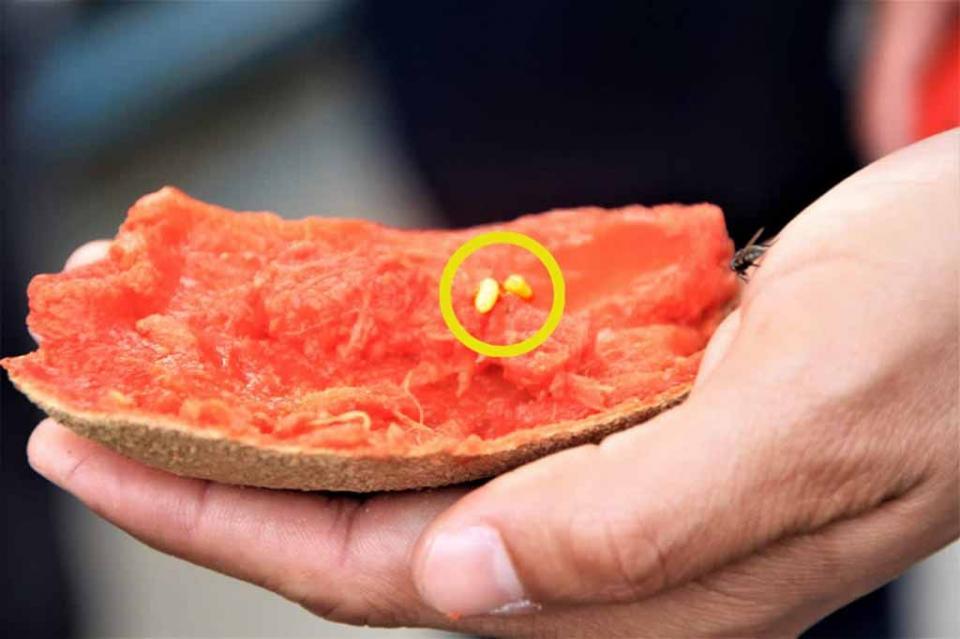 Por segundo día consecutivo, retornan fruta por incumplimientos fitosanitarios
