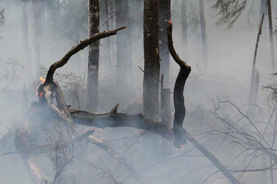 Incendios afectan 14 mil hectáreas en Baja California