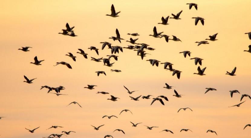 Expertos discutirán sobre amenazas de especies migratorias